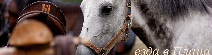 езда в Плана